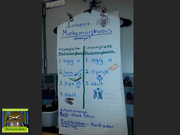 Anchor chart showing incomplete and complete metamorphosis.  Want to see our metamorphosis lab in action?  Check out the post on our Insect Zoo.